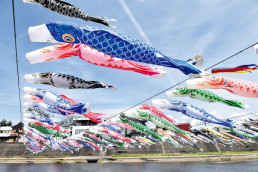 600 carp streamers swim over the Kamo River