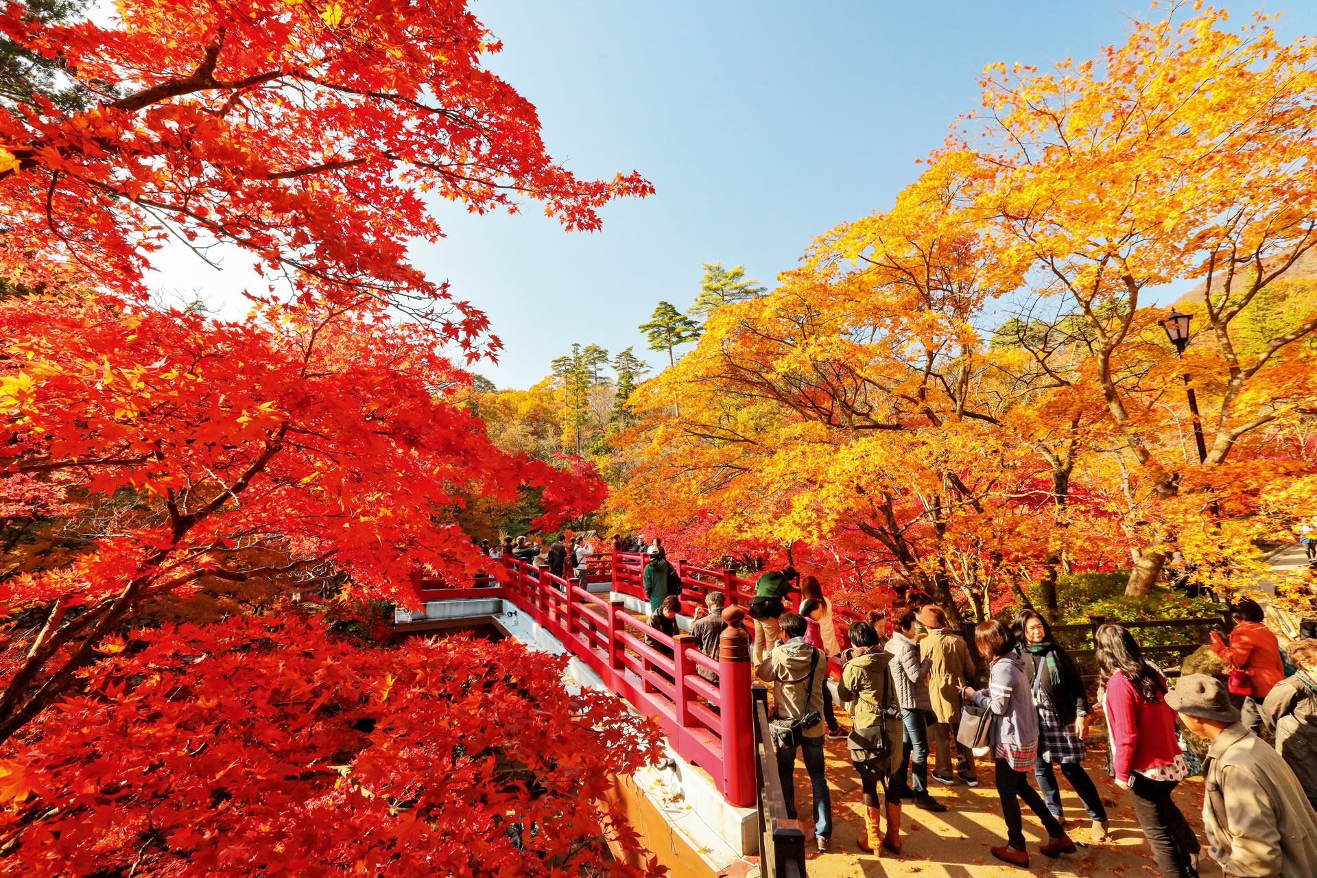 The Maple Valley of the Yahiko Park