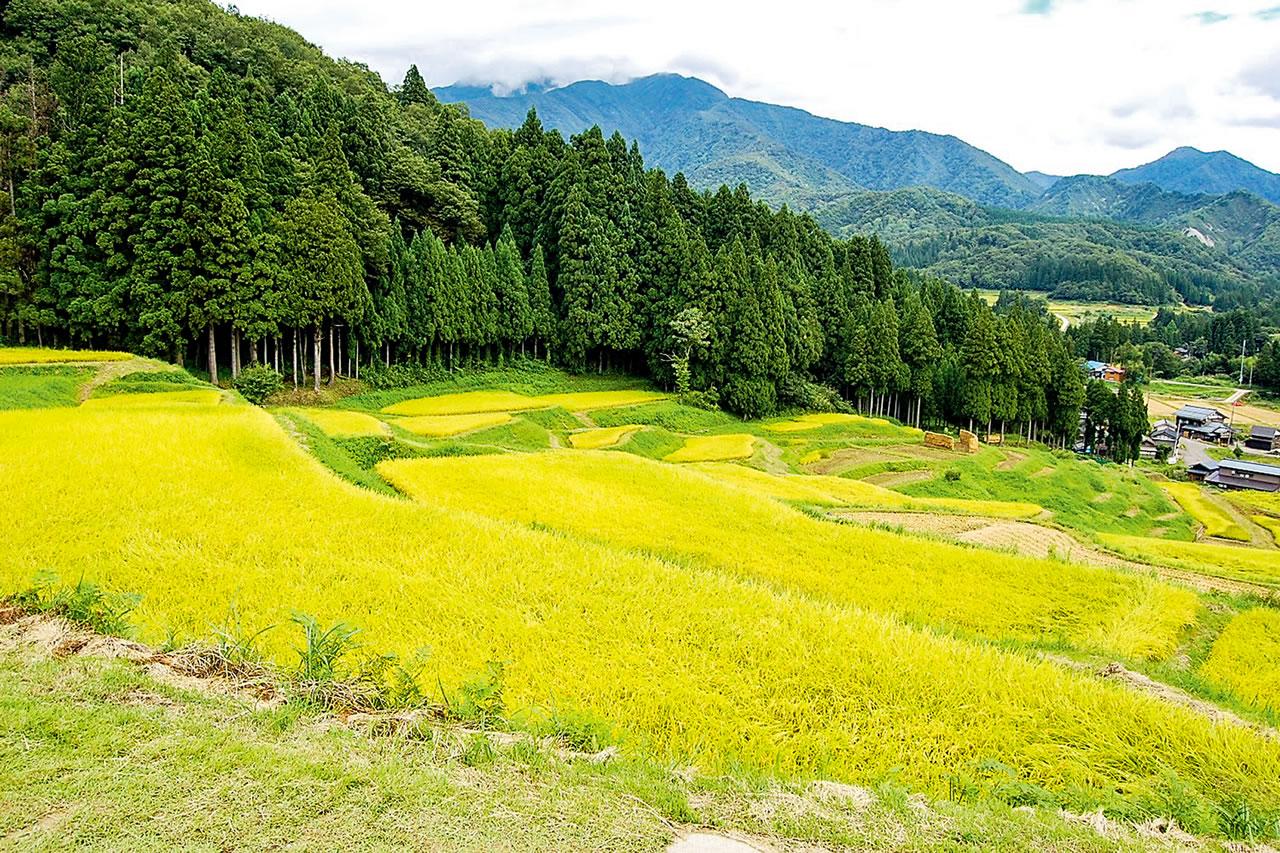 Kitaimogawa Rice Terraces