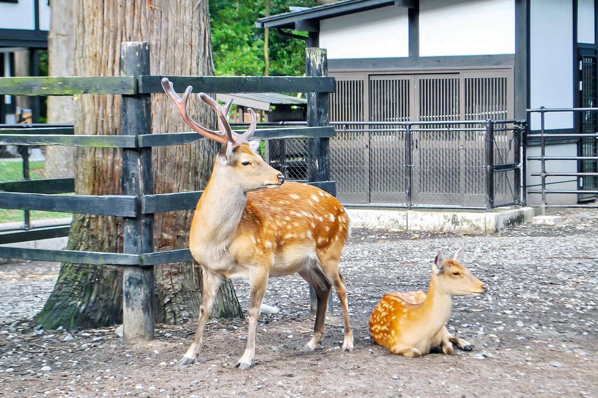 Yahiko Shrine Deer Park